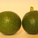 Bonny Doon Avocado