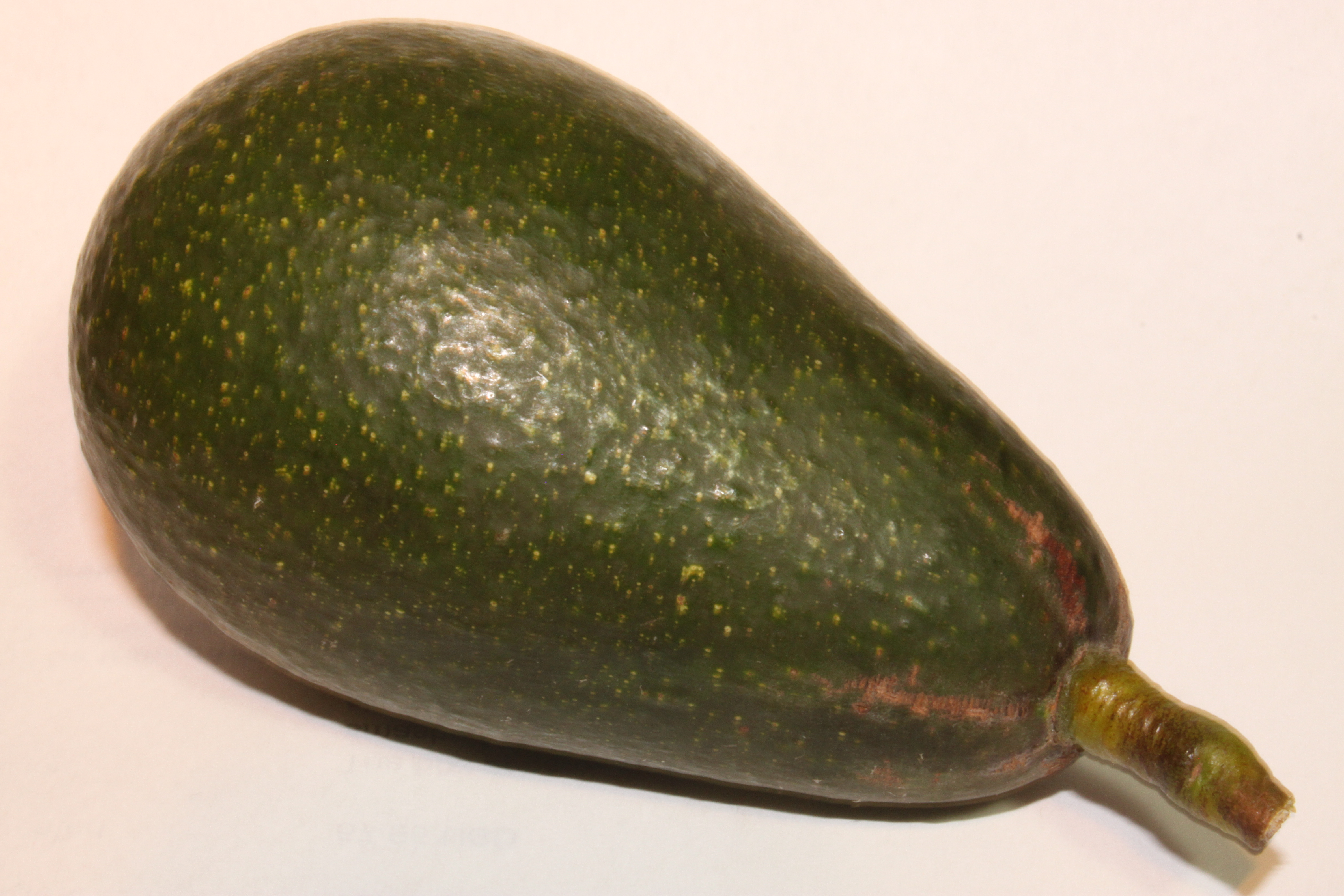 Jan Boyce Avocado