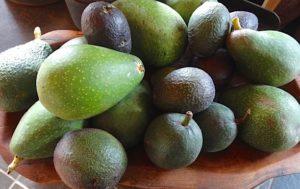 Other avocado varieties